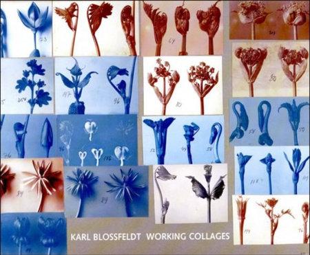 Karl Blossfeldt by