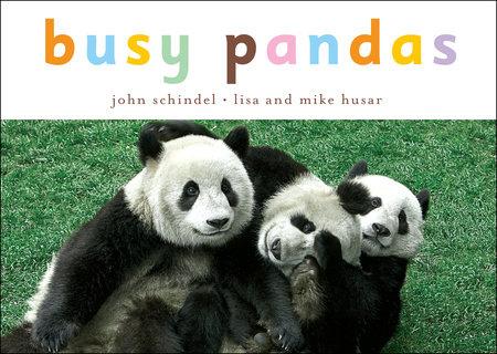 Busy Pandas