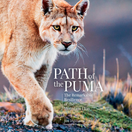 Path of the Puma by Jim Williams and Joe Glickman