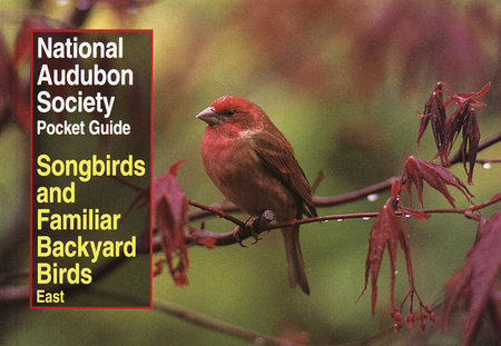 National Audubon Society Pocket Guide to Songbirds and Familiar Backyard Birds: Eastern Region by National Audubon Society