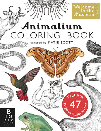 Animalium Coloring Book by Jenny Broom