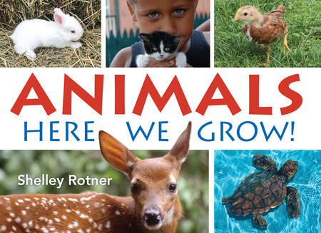 Animals! by Shelley Rotner