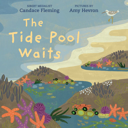 The Tide Pool Waits by Candace Fleming