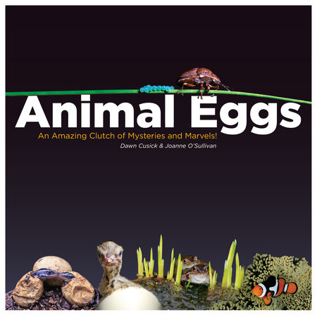 Animal Eggs by Dawn Cusick and Joanne O'Sullivan