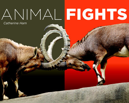 Animal Fights by Catherine Ham