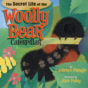 The Secret Life of the Woolly Bear Caterpillar