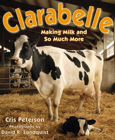 Clarabelle by Cris Peterson