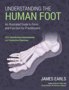 Understanding the Human Foot